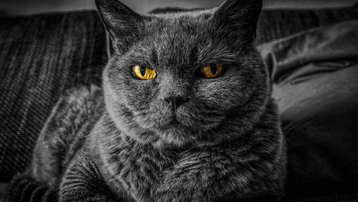 Tresura kota - wszystko, co trzeba wiedzieć