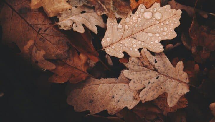 depresja-jesienna-jak-sobie-z-nia-radzic
